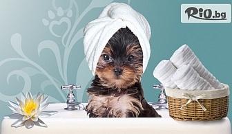 За домашния любимец! Хигиенна подстрижка и оформяне на козината на кучето, от Грууминг салон SUNNY PETS