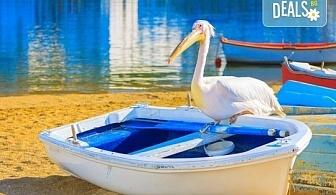Еднодневна екскурзия до пещерата Алистрати и Керкини – езерото на пеликаните и фламингото! Транспорт и екскурзовод от Еко Тур!