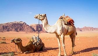 Екскурзия до Йордания! Транспорт + 4 нощувки на човек със закуски и вечери + джип сафафи и екскурзия до Петра от ТА Далла Турс