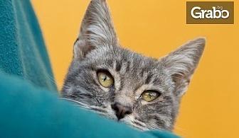 Международната изложба на котки на 22 и 23 Февруари