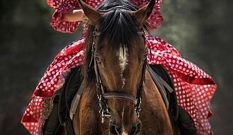 45 минути конна езда от конна база София – Юг, кв. Драгалевци