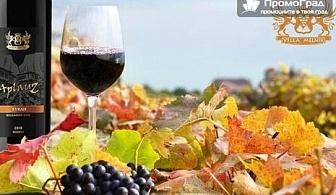 Празник на лозарите и винарите във винарна Вила Мелник - еднодневна екскурзия с Дениз Травел