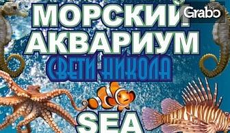 Разгледай морското дъно през аквариум в Несебър! Вход за възрастен, без или със дете