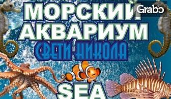 Разгледайте морското дъно през аквариум в Несебър! Вход за възрастен, без или със дете