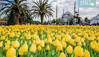От Варна и Бургас! Фестивал на лалето в Истанбул със Запрянов Травел! 2 нощувки със закуски в хотел 3*, транспорт, посещение на мол в Истанбул и на Лозенград