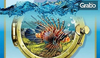 """Вход за двама за изложба на екзотични рибки """"Подводен свят""""в Китен"""